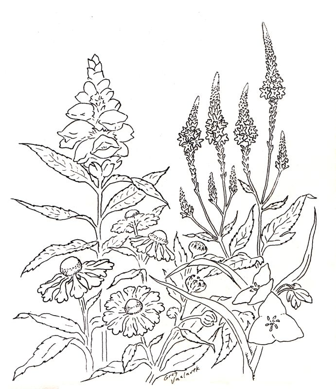 25+ Best Ideas About Plant Nursery On Pinterest