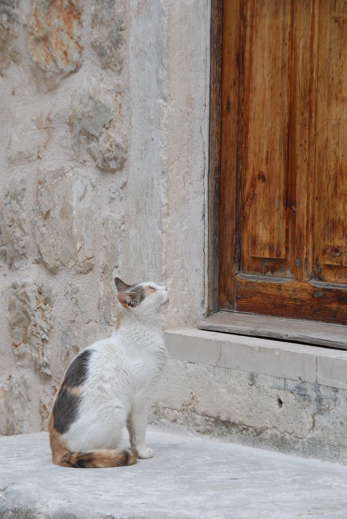 Cat at Door - by Paul Lawston on Flickr