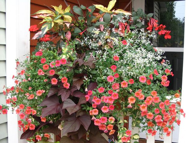 How To Design a Container Garden    Follow this simple design concept, and boost the impact of your container gardens with plants of various sizes, textures and color combinations. 3 types of plants: Thrillers, Fillers & Spillers