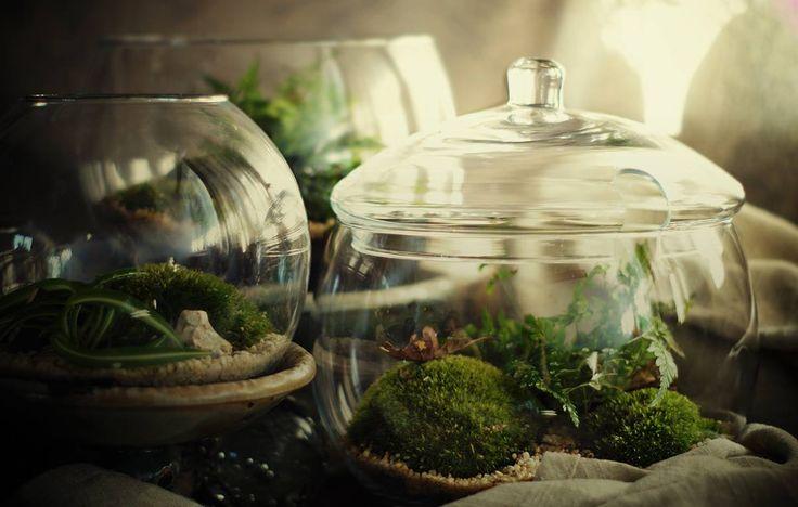 https://www.facebook.com/mossaterra #moss #forest #glass #home decore #miniforest