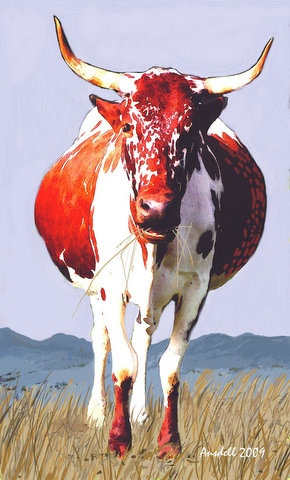 RED NGUNI EATING GRASS
