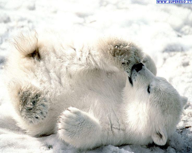 Un amore di orsacchiotto...