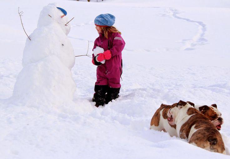 Optimi Amici: Hundene er iallfall mer glad i snø enn meg...