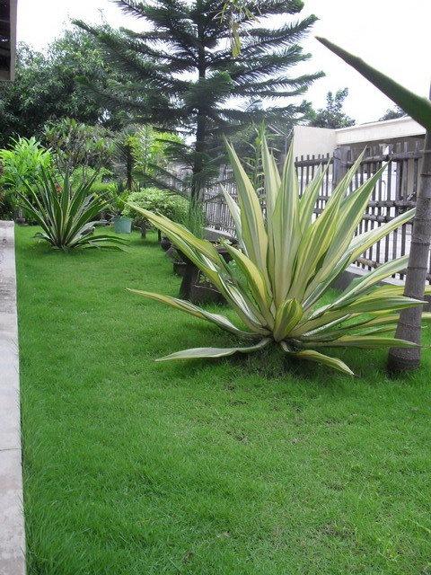 Front Garden of my home