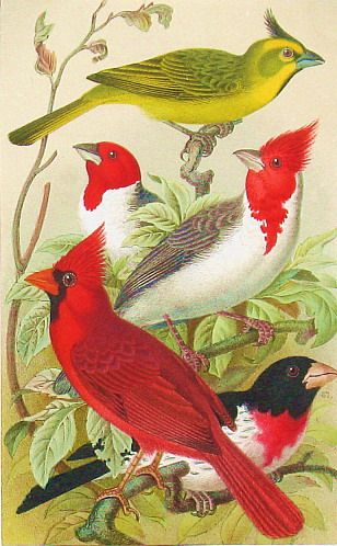 http://wordplay.hubpages.com/hub/free-bird-pictures