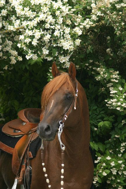 Baikal Easter and Spring Horses. Horses Learn about #HorseHealth #HorseColic www.loveyour.horse