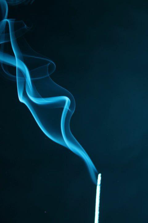 Rook fotografie