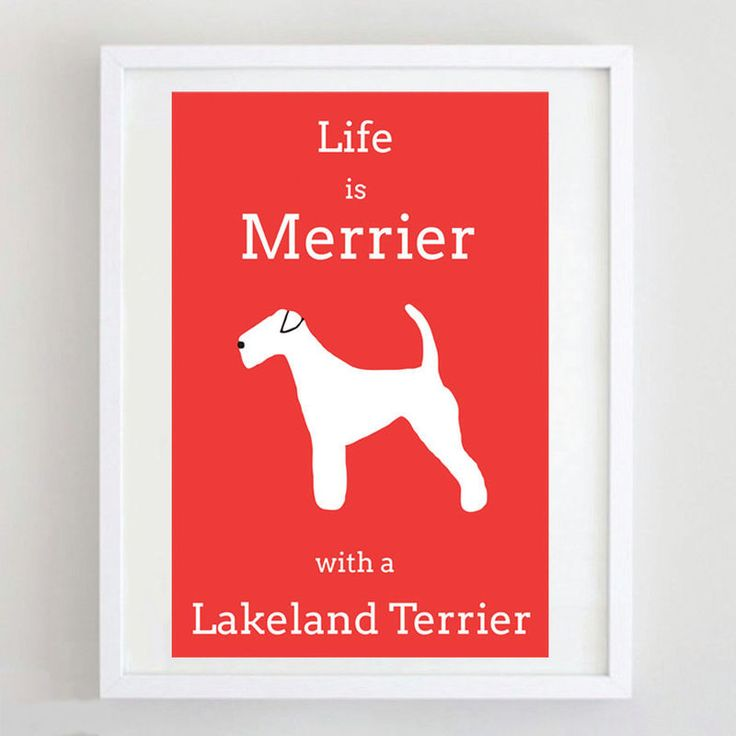 Lakeland Terrier Print - product image