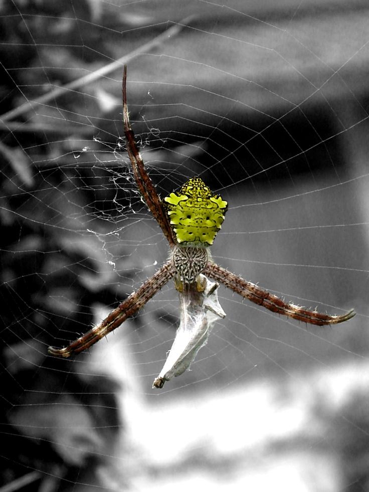 I'm a Spider, Man!