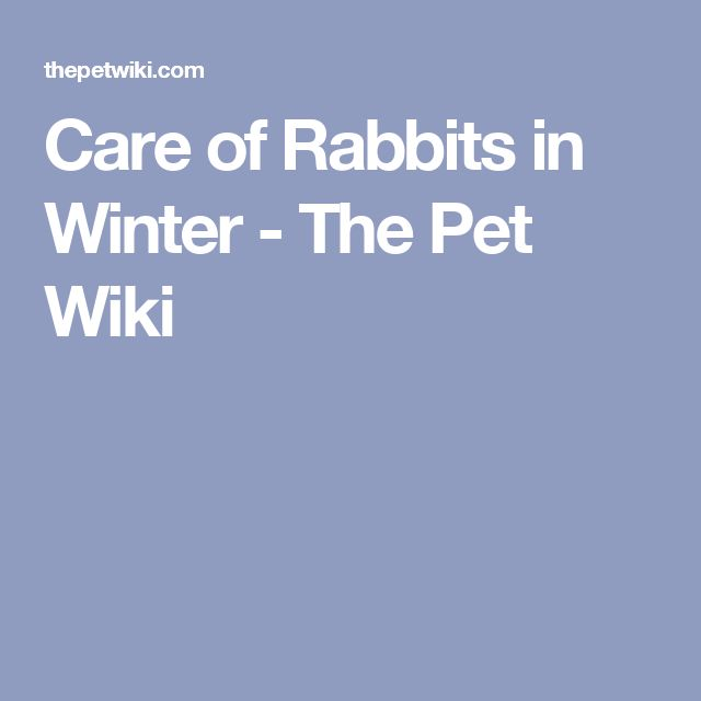Care of Rabbits in Winter - The Pet Wiki
