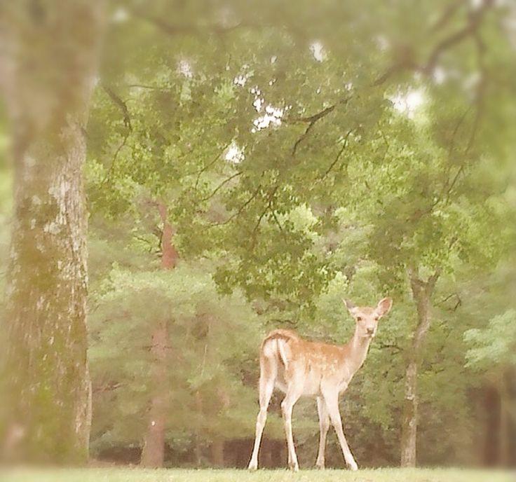 奈良公園で鹿
