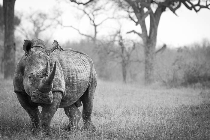 An ambassador for his species. Photograph by Don Heyneke