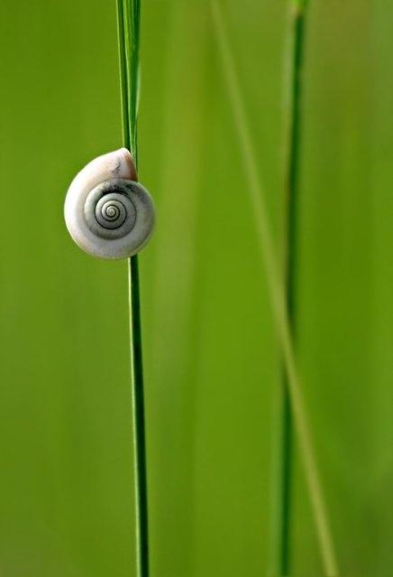 on the linear spiral path...: Green Delight, Samya Photography, Beautiful Natural, Grass Fanart, Wood Snails, Snails Wood, Grass Fandom, Beautiful World, Micro Photography