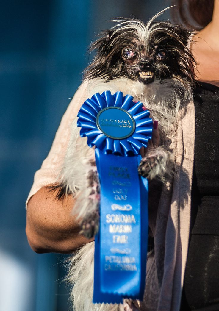 16 Of The Cutest Dogs At The World's Ugliest Dog Contest