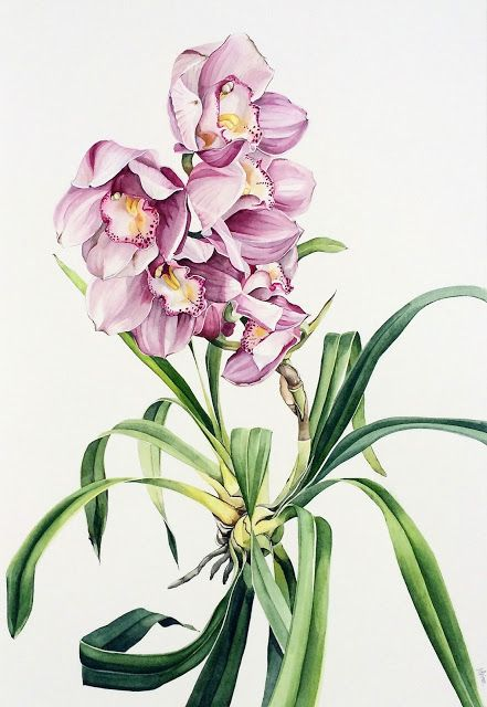 Pink Cymbidiums - watercolour on paper by Pip Spiro