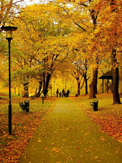 Stockholm, Sweden in the fall... - This literally made me gasp... I don't think I'll recover until I see this myself!