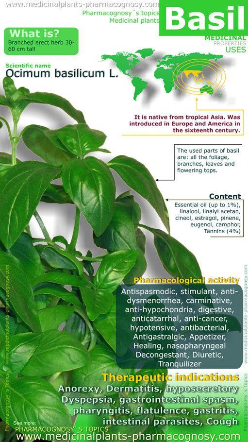 http://www.medicinalplants-pharmacognosy.com/herbs-medicinal-plants/basil-benefits/healt-benefits-infographic/