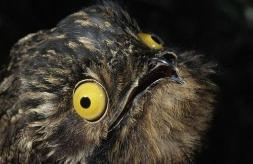 My inner spirit animal is a great potoo I just wanted to let you know