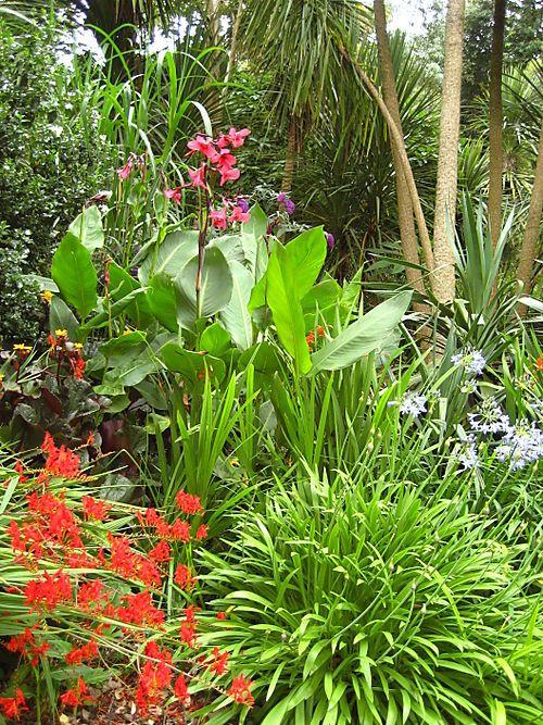 Les 503 meilleures images du tableau jardin tropical sur for Amenagement jardin tropical