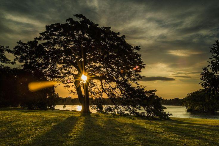 Tree in Centennial Park Sydney by Keith McInnes on 500px