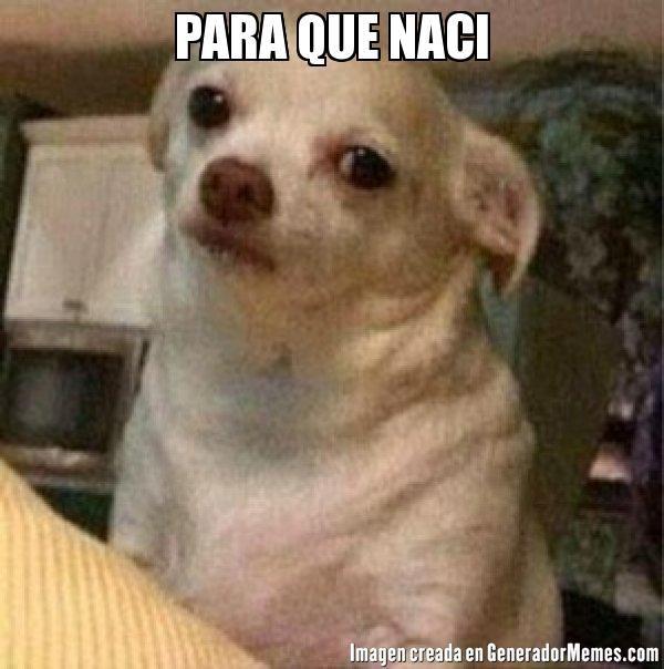 PARA QUE NACI - perro chihuahua enojado meme