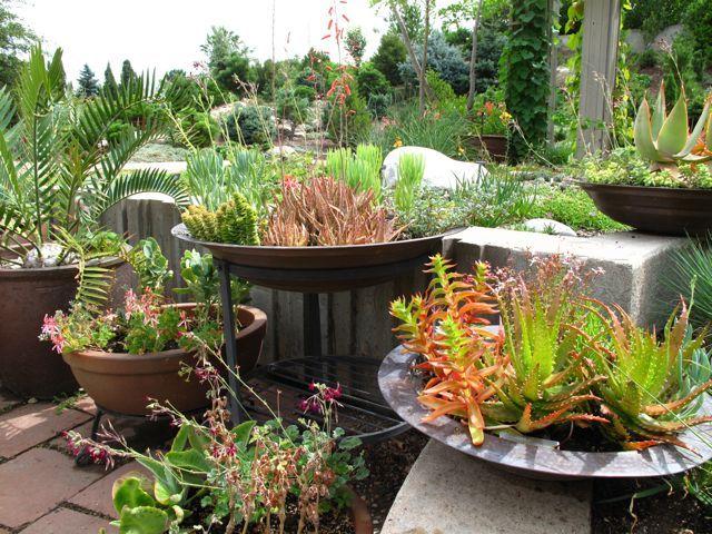 Garden Design South Africa 33 best australian / south african natives images on pinterest