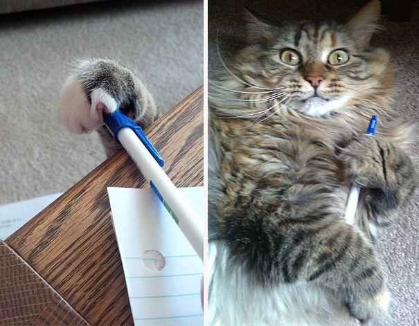 Chat savant qui vole des stylos