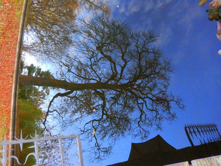 Underwater tree  -