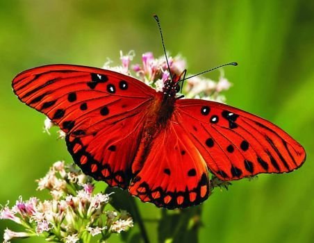 Beautiful Butterflies #09 (63 pieces)