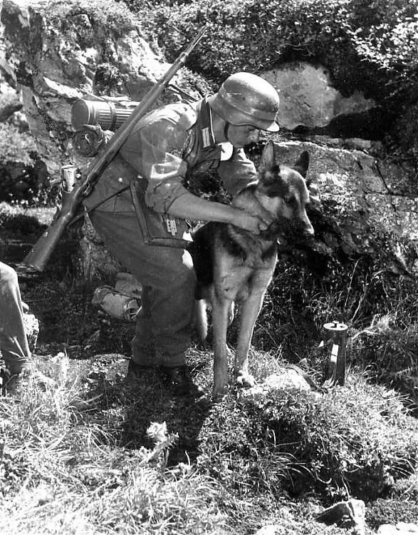 WW2 German army and animals - Page 13 - Stormfront