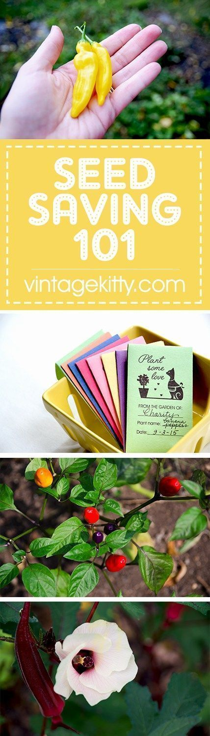 If you've ever wanted to save your own seeds, these Seed Saving 101 tips and cute envelopes will get you started on next year's garden! | http://vintagekitty.com