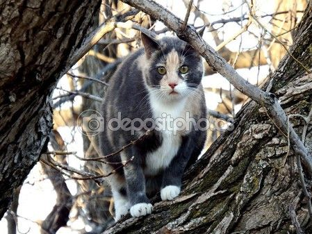 Spotted tabby — Stock Photo #70536605