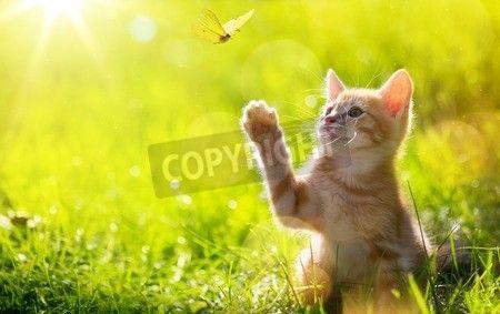 芸術若い猫/子猫のバックライトとてんとう虫を狩猟