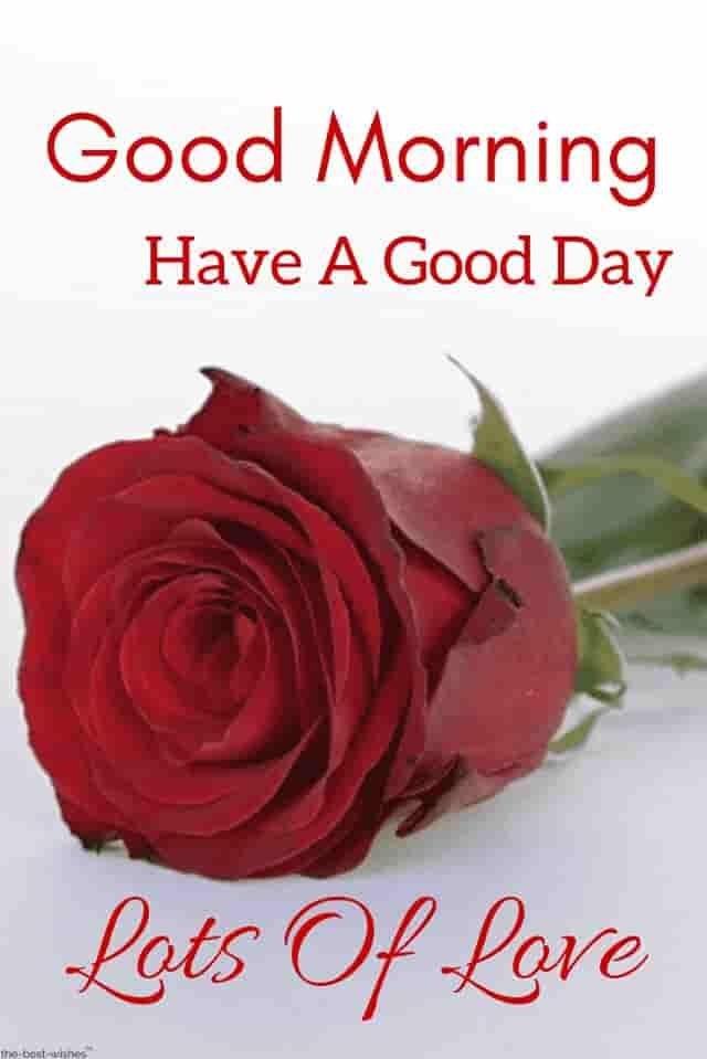 Good Morning Red Rose Images Good Morning Wishes Good Morning