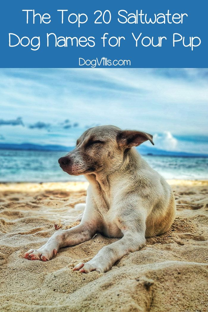 The Top 20 Saltwater Dog Names for Your Pup | Dog Recipes, Training