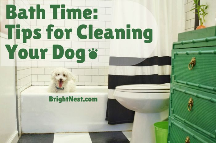bath time tips for cleaning your dog dog bath and doggies