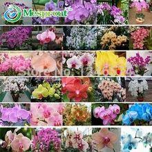 Darmowa wysyłka monoflord bonsai nasiona Kwiatów nasiona storczyków cattleya multicolor butterfly orchid seed-100 sztuk(China (Mainland))