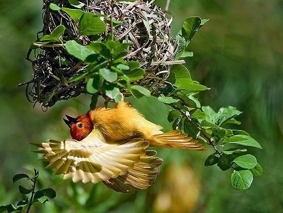 Nagyon szép,Családi idill,Szép madarak,Bagolypár,Kettő + egy,Kettő + egy,Gyönyörű galambok,Csodálatos madarak,Csodálatos madarak,Csodálatos madarak, - nagyiful Blogja - Valentin nap,A hét napjai,A S T képei,Állatok világa,Álomszép Francia képek,Anne Geddes: Babák,Anyák napja,Apróságok vegyes,Arany blog díj,Az Ősz szinvilága,B.U.É.K.,Babák: Lisa Jane képei,Barátság,Betty-Boop, és babás képek,Cindy Grundsten csodás képei,Csendélet,Csigák,Csodálatos tájképek,Csodálatos…