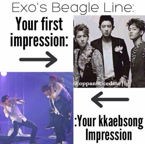 Haha exo's beagle line lol XD