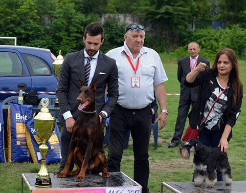 PRIDE OF SERBIA Kennel-Hard Work Pays Off!!!
