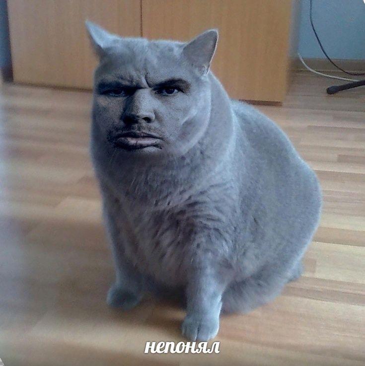 Картинка непонимающего кота второй год