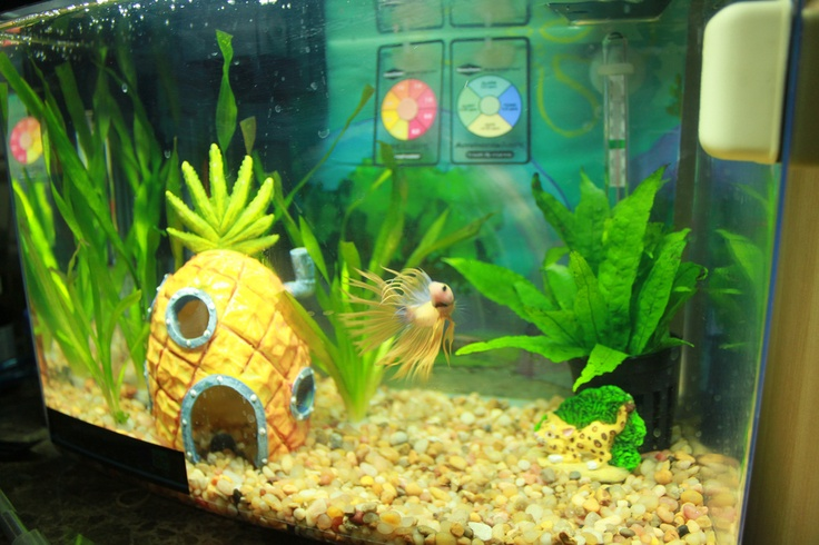 107 best diy fish tanks images on pinterest fish for Spongebob fish tank