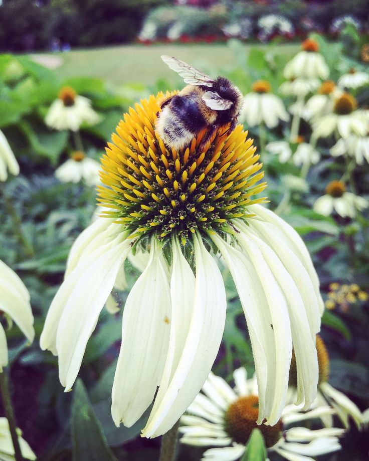 Beautiful bee in Kew Gardens, London
