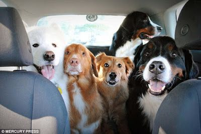 1. Akita Inu     Source    2. Siberian Husky    Source   3. Tibetan Mastiff                     ...