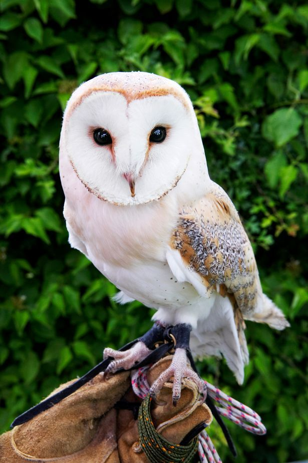 Careless owners: People are abandoning pets after the Harry Potter craze, such as this barn owl :( this is so sad! I would take care of many if I could and if I had the time.