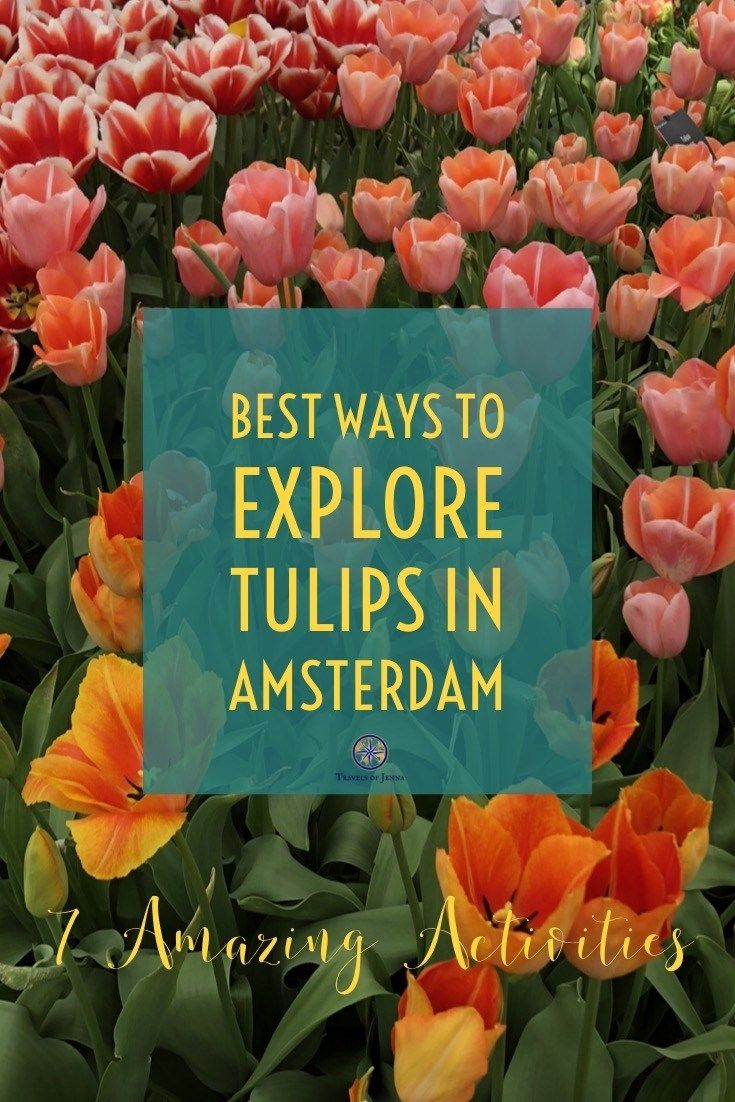 7 Best Things To Do In Amsterdam If You Adore Tulips Amsterdam