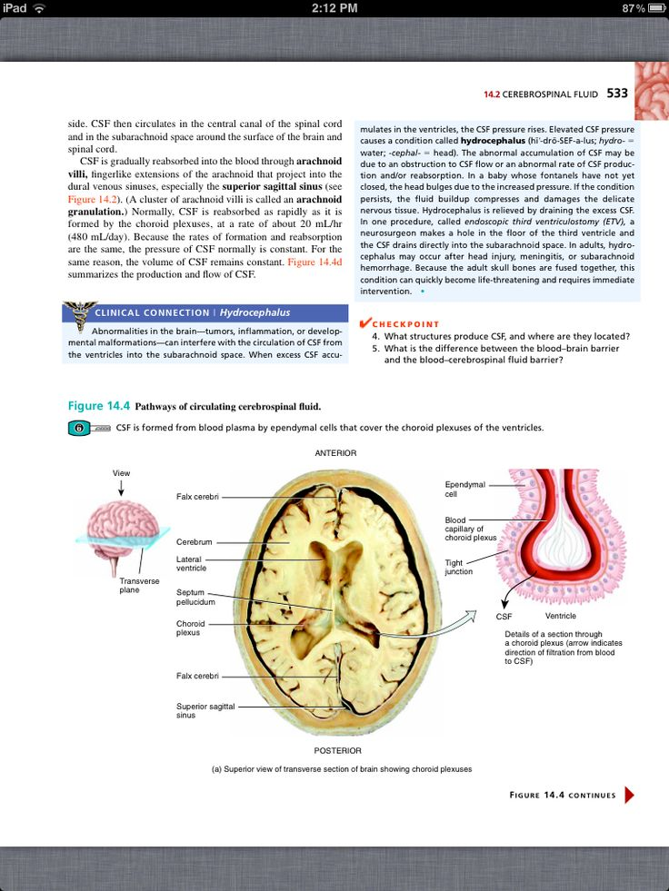 Principles of Anatomy and Physiology, Chapter 14, The Brain and Cranial Nerves, 7, book pg 533