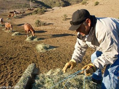 Return to Freedom: Inside a Wild Horse Sanctuary