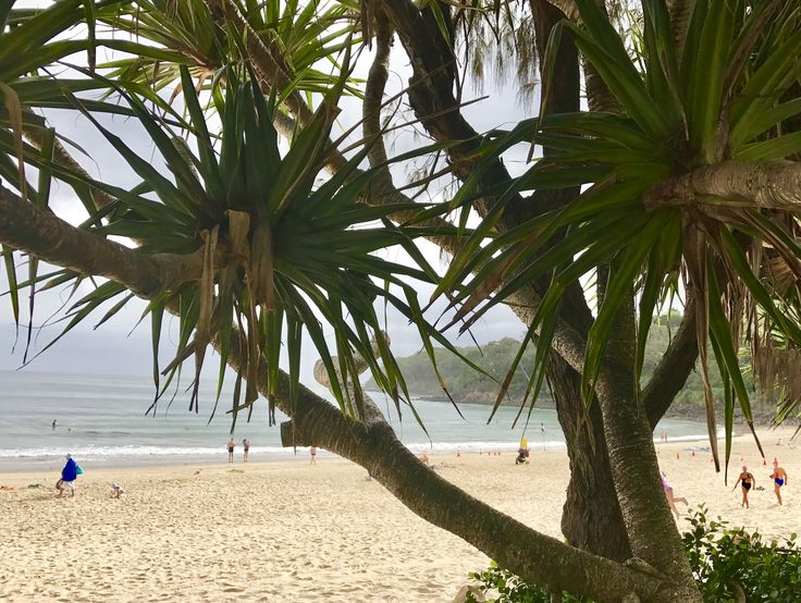 Down on the boardwalk Noosa main beach is where we love to walk. Only minutes way from ikatan Spa  http://ikatanspa.com/
