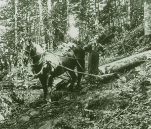 Love this photo from the Global Institute of Sustainable Forestry Lantern Slide collection: Rare Images from Forestry's Past.